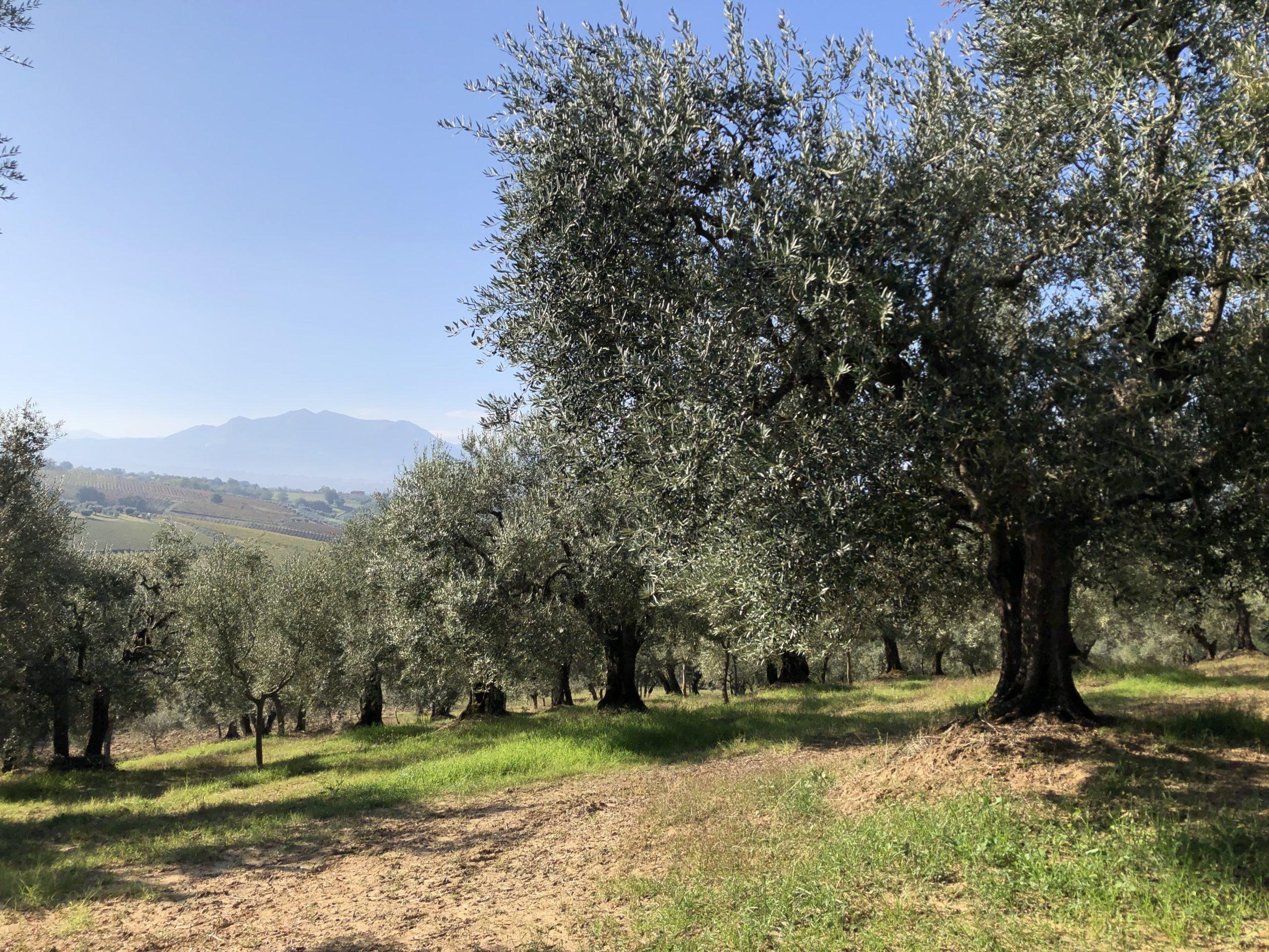 Azienda Agricola Maria Ianniciello